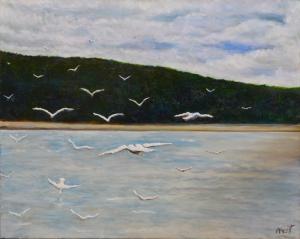 Gull-invasion